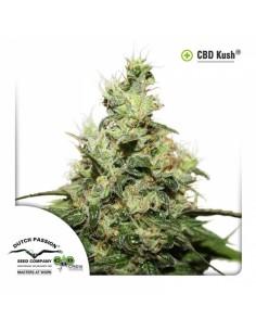Cbd Kush X3 - Dutch Passion